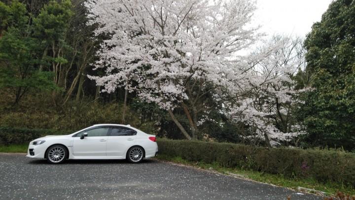 桜2019040502.jpg